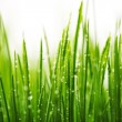 Green wet grass with dew on a blades — Stock Photo #38528989