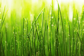 Green wet grass with dew on a blades — Stock Photo