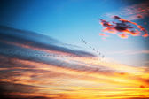 Birds flying in dramatic blue sky, sunset shot — Foto Stock
