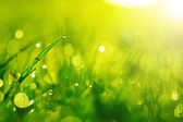 Green wet grass with dew on a blades. Shallow DOF — Foto Stock