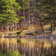 Mountain lake, tree reflection — Stock Photo