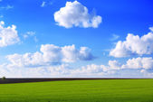 Green field and cloudy sky — Foto Stock
