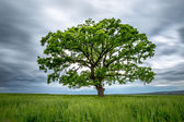 Blurred Long-Exposure green tree in a field — Stock Photo