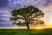 Big green tree in a field, dramatic clouds — Stock Photo