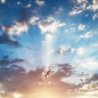 Beautiful cloudscape and flying bird, sunrise shot — Stock Photo #51786943