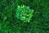Food greens — Stock Photo