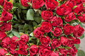 Roses background — Stock Photo