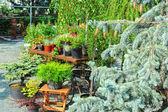 Landscaping — Fotografia Stock
