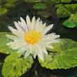 Water Lily — Stock Photo #27896419