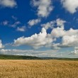 Wheat field and blue cloudy sky. - Stock Photo