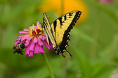 Butterfly and bee — Stock Photo