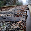 Stock Photo: Close up of railroad tracks