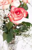 White roses — Stock Photo