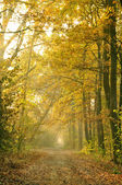 Fall in the wood — Stock Photo