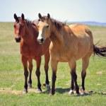 Ranch horses — Stock Photo