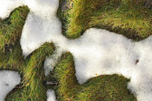 Melting snow in the grass texture — Stock Photo