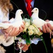 Pigeons in hands of the groom and the bride — Stock Photo