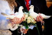 Pigeons in hands of the groom and the bride — Stok fotoğraf
