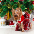 Small doggie in a suit with tinsel, new year — Stok fotoğraf