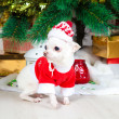 Small doggie in a New Year's suit — Foto de Stock
