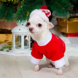 Small doggie in a New Year's suit — Stock Photo
