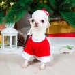 Small doggie in a New Year's suit — Foto Stock