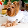 Small doggie in a suit with tinsel, new year — Stockfoto