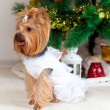 Small doggie in suit with tinsel, new year — Stock Photo #20798059