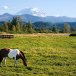 Paint Horse and Mount Rainier — Stock Photo