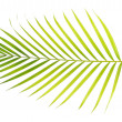 Green palm leaf — Stock Photo #13954096