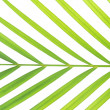Green palm leaf — Stock Photo