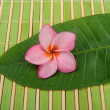 Frangipani and polished stone on bamboo mat - Stock Photo