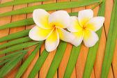 Frangipani and polished stone on bamboo mat — Stock Photo