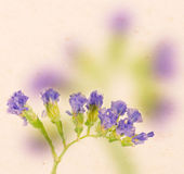 Lavender on paper background — Stock Photo