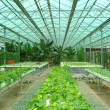 Hydroponic farm - Stock Photo