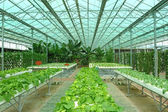 Hydroponic farm — Stock Photo