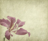 Flower blossom on old antique vintage paper background — Stock Photo