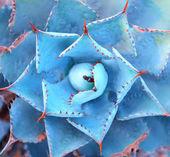 肉质植物在沙漠中的宏 — 图库照片
