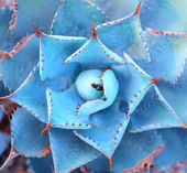 Macro of succulent plant in the desert — Stock Photo