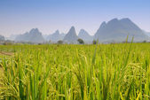 Andscape in Yangshuo Guilin, China — Stock Photo