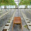 Stock Photo: Handcart on hydroponic farm