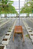 Handcart on hydroponic farm — Stock Photo