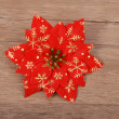 Christmas flower poinsettia on wood — Stock Photo