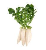 Daikon radishes isolated on white background — Stock Photo