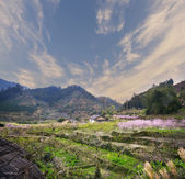 Rural landscape,Peach Blossom in moutainous area in shaoguan district, guangdong province, China, — Stock Photo