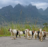 Flock of goat in the mountains — Stock Photo