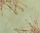 Plum blossom on old antique vintage paper — Stock Photo