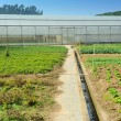 Stock Photo: Greenhouse on farm