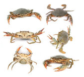 Fresh Raw Crab — Foto Stock