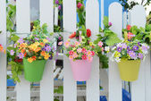 Hanging Flower Pots with fence — 图库照片